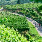 tour vitigni alto adige